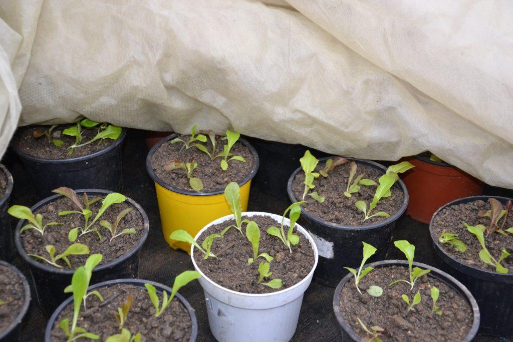 Schaugarten Gemüse-Raritäten Bio-Gärtnerei Beisteiner Bucklige Welt Niederösterreich